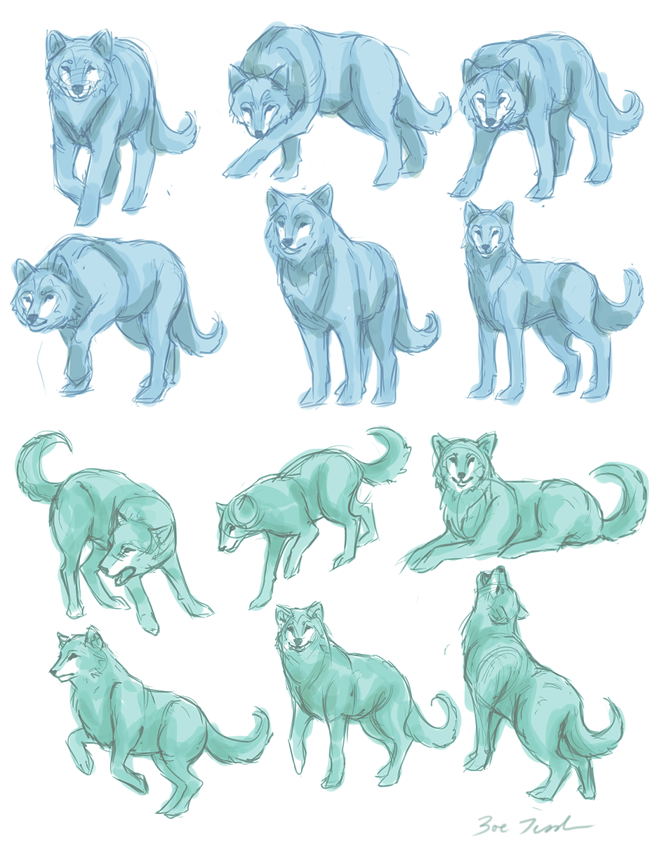 wolf front poses - 789×1012